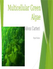 Multicellular Green Algae.pptx