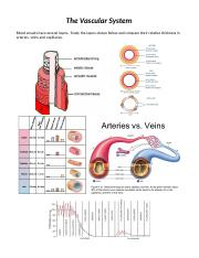 04 - Arteries and Veins.docx