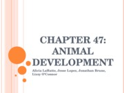 CH47Animal Development