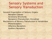 Powerpoint 11-Sensory Systems