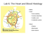 Lab+6+Heart + and+Blood+Histo