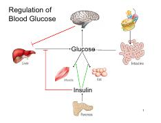 Jan 16-Liver Glucose Metabolism and Fatty Acid Synthesis.pdf