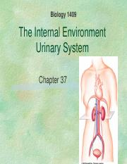 Chapter 37 Urinary.ppt