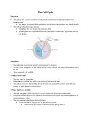 Biology 171 Study Guide The Cell Cycle