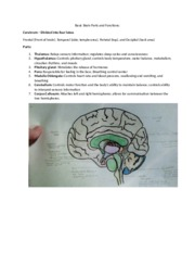 Basic Brain Parts and Functions