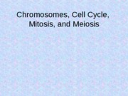 2. Chromosomes & Cell Cycle