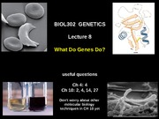 Lecture 7  What Genes Do Spr2015 (4)