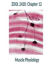 Zool 2420 Ch 12_ Muscle physiology.pptx