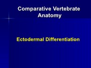 embryology ectodermal