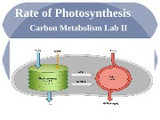 Rate_of_Photosynthesis_2013