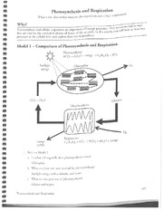 Respiration and Photosynthesis KEY - Photosynthesis and Respiration ...