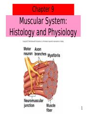 3_ch_9_muscle_notes (1).ppt