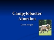 Campylobacter Abortion-treatment