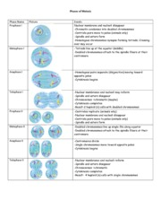 Phases_of_Meiosis_Notes