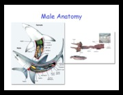 5b. Male Anatomy 2010