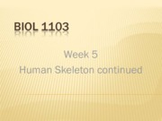 Week 05 Skeleton Bone II colour