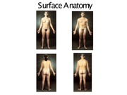 3 surface anatomy