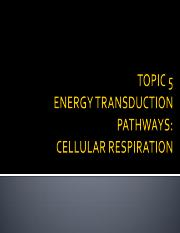 5_Topic 5_energy transduction pathways.pdf