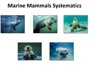 Lecture 2.PinnipedsSirenianandOther Systematics