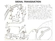 102711Signal transduction