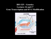 Gene Transcription and RNA Modification.ppt