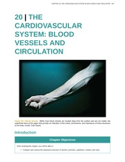 Chapter 20 - Cardiovascular System - Blood Vessels and Circulation
