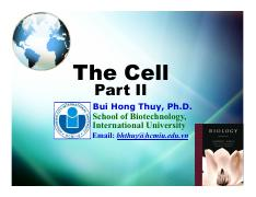Lecture 4. The Cell (Part II)