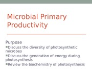 7 BB Microbial Primary Productivity