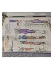 Helpful Anatomy Coloring Book Diagram 4