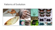 Chapter 3 - Patterns of Evolution (JFM)_1
