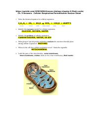 Ch 9 Answers to Cellular Respiration and Fermentation Worksheet.doc