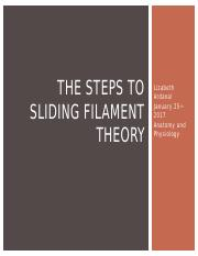 The_steps_to_sliding_filament_theory.pptx