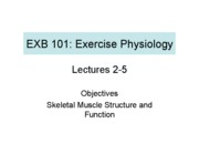 02-05 Muscle Structure Function EXB101 F10