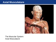 Unit 3 Axial Musculature.ppt