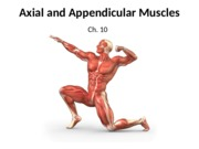 Canvas_ Axial and Appendicular Muscles.pptx