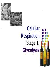 Glycolysis.ppt