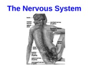 Lecture03IntroNervousSystem