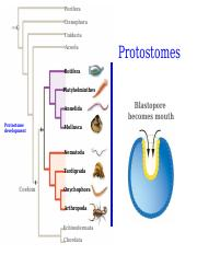 Chapter34_Protostomes1.pptx