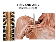 12_PNS and ANS_1 (1)