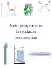 Chapter 5 - Primary Structure
