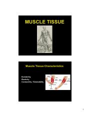 ANP 300 - Lecture 7 - Muscle Tissue (color)