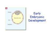 16. Early Embryo Develop '10