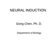 2-Neural_Induction