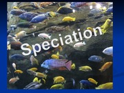 Speciation Lecture