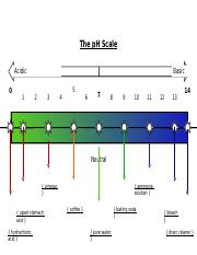 The pH Scale.docx