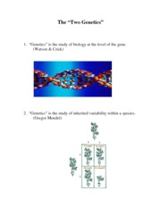 02.++Molecular+Genetics+Review+Lecture