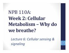 Lecture 6. Cellular sensing and signaling pathways.pdf