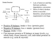 LECTURE 7 Protein