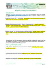 BacterialIdentificationLab.docx