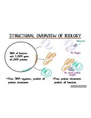Structural_Overview_of_Biology.jpg